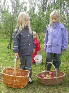 Æbleplukning