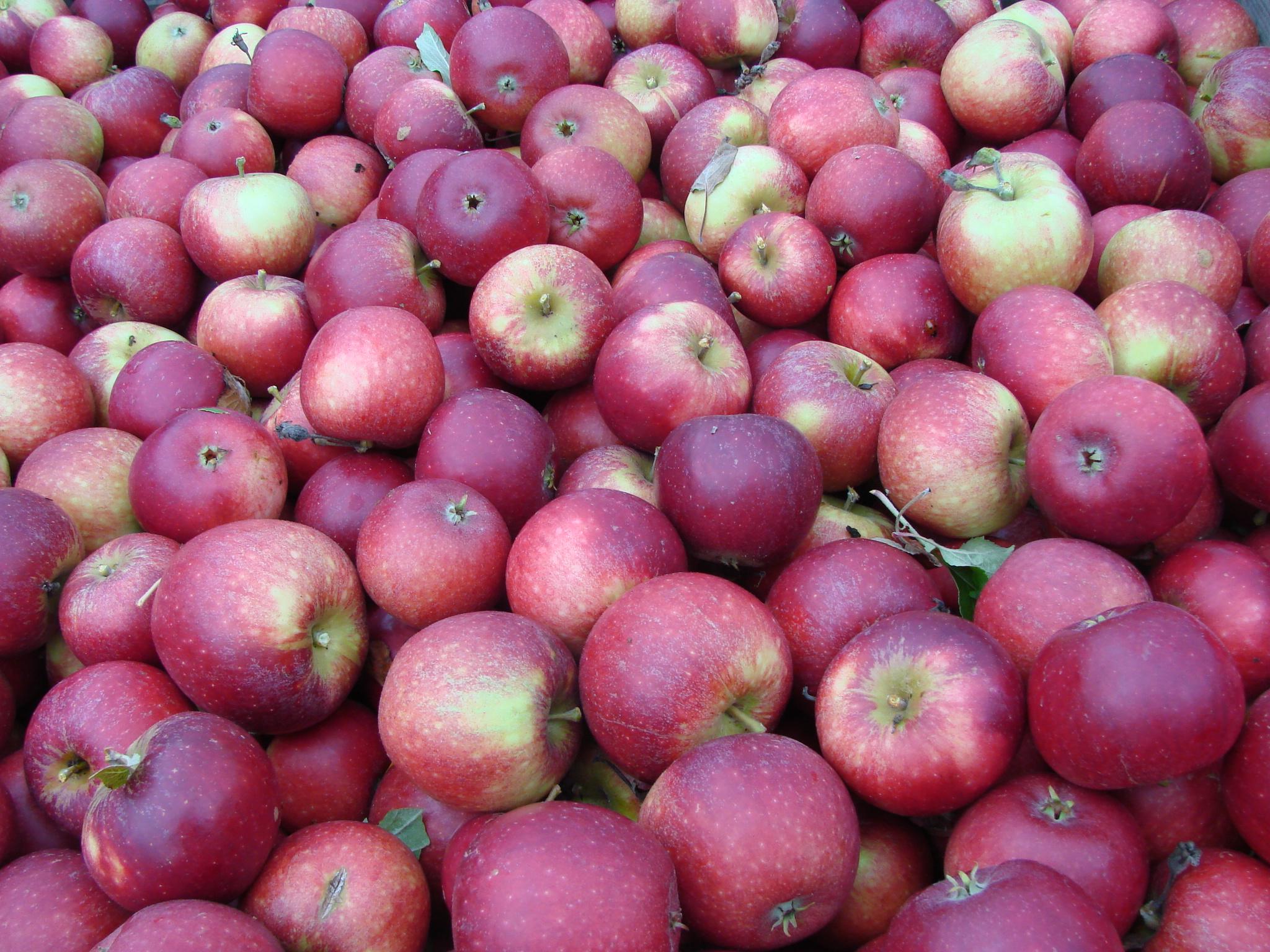 Picture of: Gode Rad Om Opbevaring Strandbakkens Frugtplantage